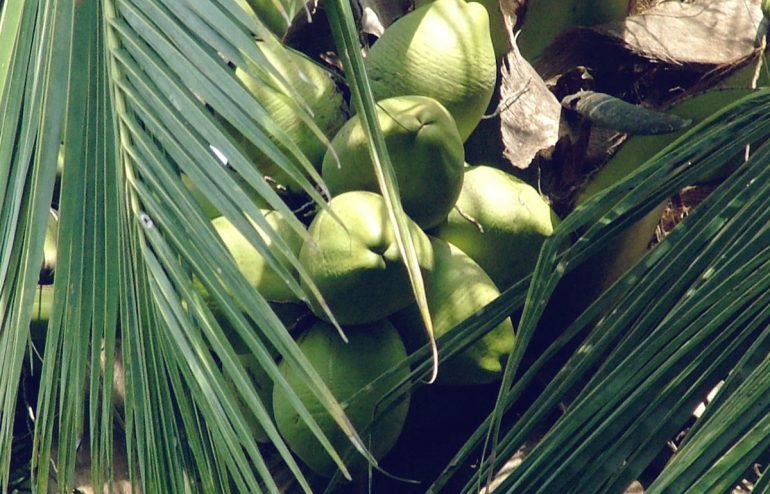 projekte-lotuslifestiftung-umweltschutz-biodiversity-srilanka11