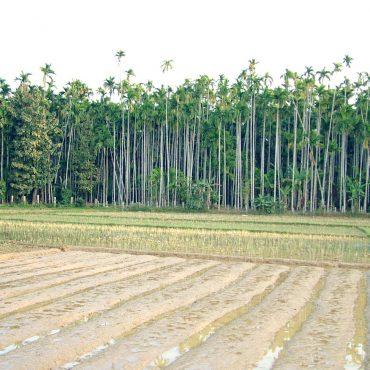 projekte-lotuslifestiftung-umweltschutz-biodiversity-srilanka12