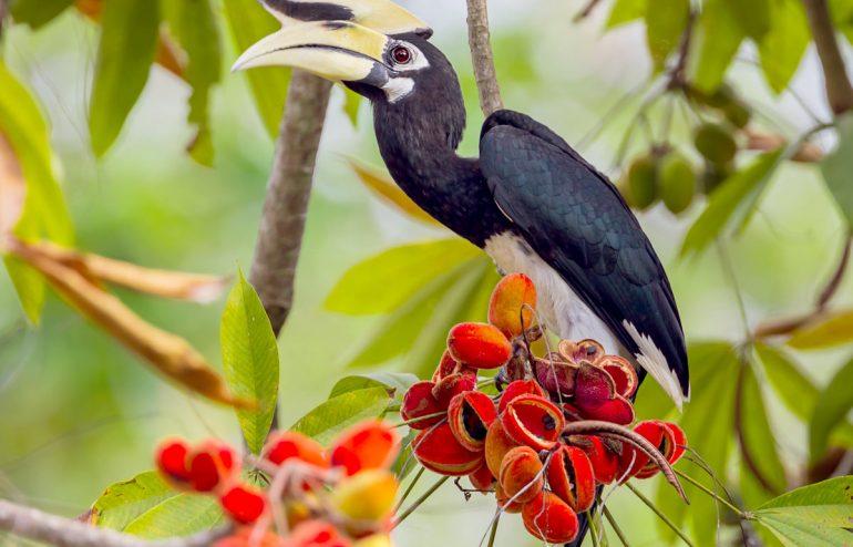 projekte-lotuslifestiftung-umweltschutz-biodiversity-srilanka4