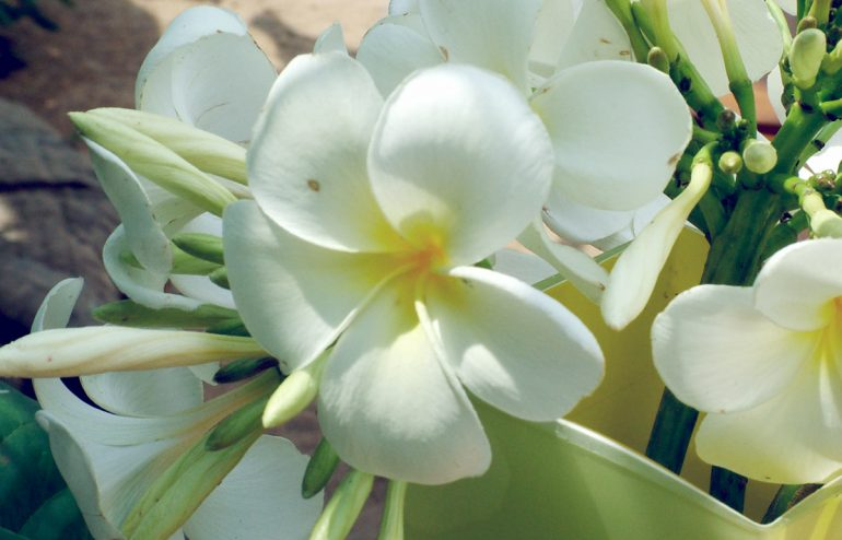 projekte-lotuslifestiftung-umweltschutz-biodiversity-srilanka5