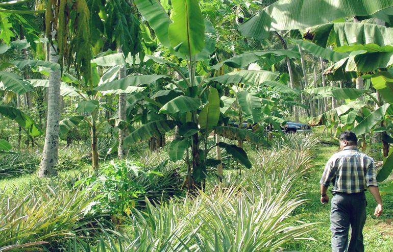 projekte-lotuslifestiftung-umweltschutz-biodiversity-srilanka7