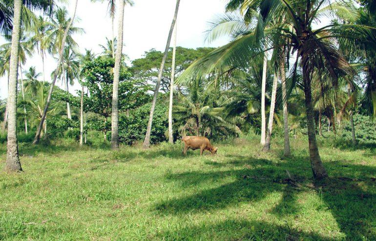 projekte-lotuslifestiftung-umweltschutz-biodiversity-srilanka8
