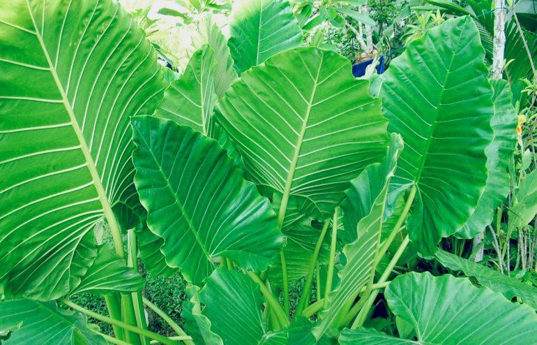 projekte-lotuslifestiftung-umweltschutz-biodiversity-srilanka9