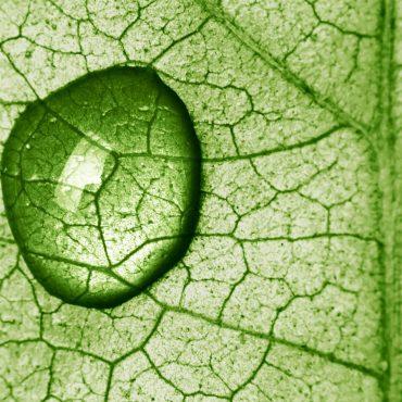 lotuslifeprojekte-umweltschutz