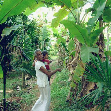 projekte-lotuslifestiftung-umweltschutz-biodiversity-srilanka13